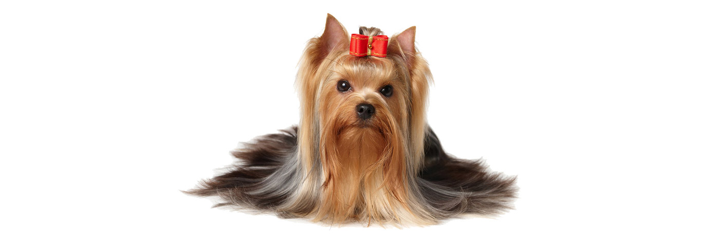Dog Grooming Manchester